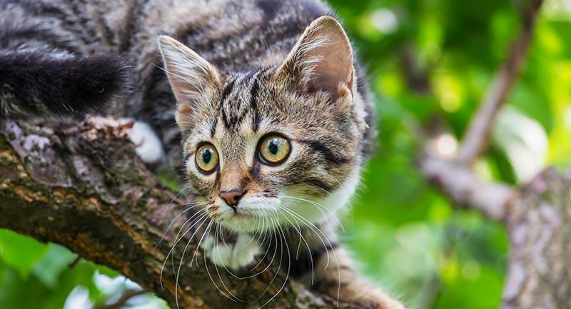 catfight-mikipedia-advocatuur